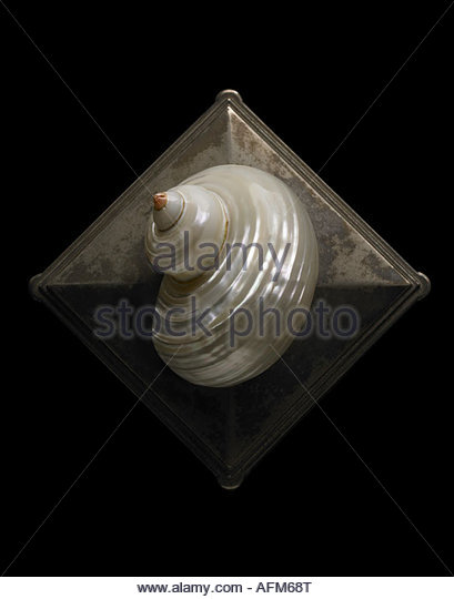 Pearl Turbo Seashell photographed on black background. - Stock Image