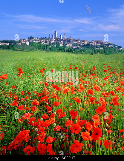 IT - TUSCANY: Historic town of San Gimignano - Stock-Bilder