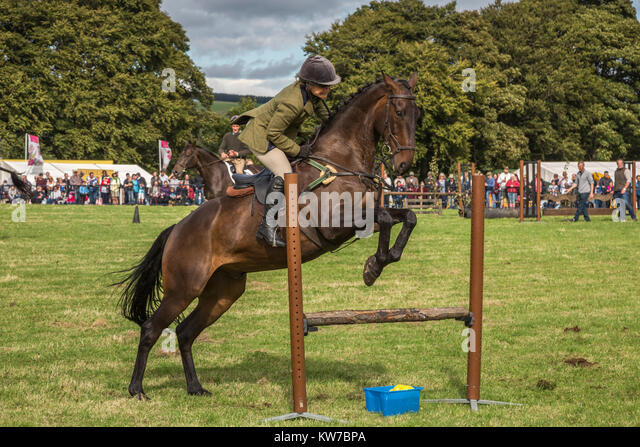 Show jumping, Bellingham Show, Bellingham, Northumberland, UK, August 2017 - Stock Image