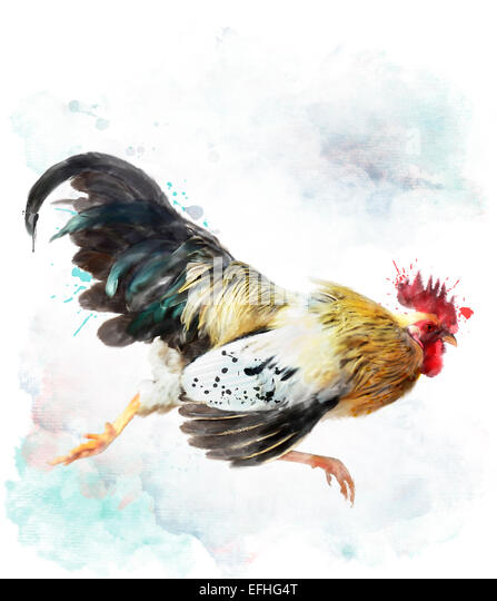 Digital Watercolor Painting Of Running Rooster, Isolated On White - Stock Image