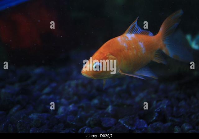 Buy fish online stock photos buy fish online stock for Order aquarium fish online