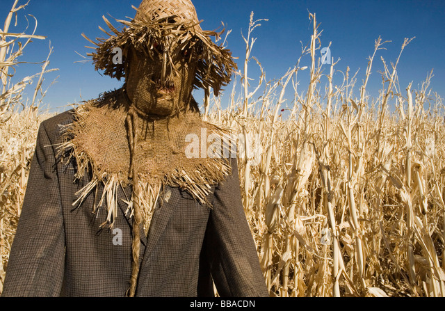 A scarecrow in a field - Stock-Bilder