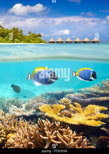 Maldives Islands - tropical underwater view with fish and reef - Stock Image
