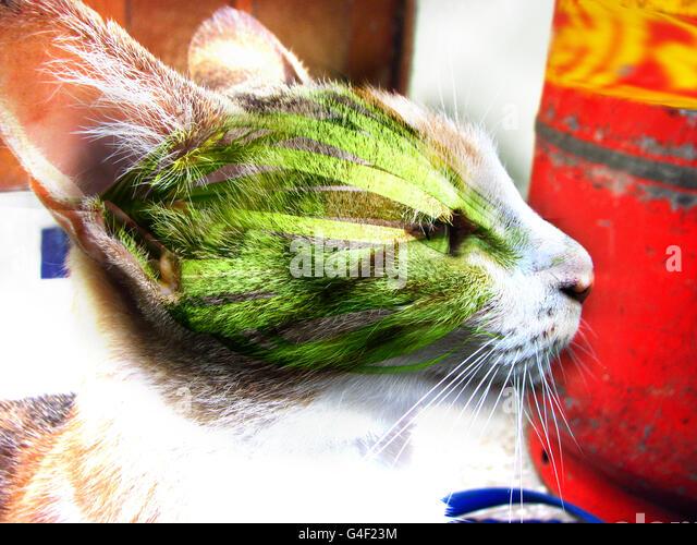 Hybrid Cat - Stock Image