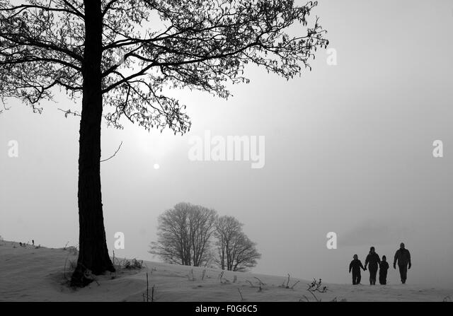 in the morning  sun in  winter in denmark, a field with trees fog and snow - Stock Image