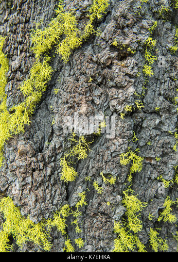 Bright Green Moss on Tree Trunk background image - Stock Image