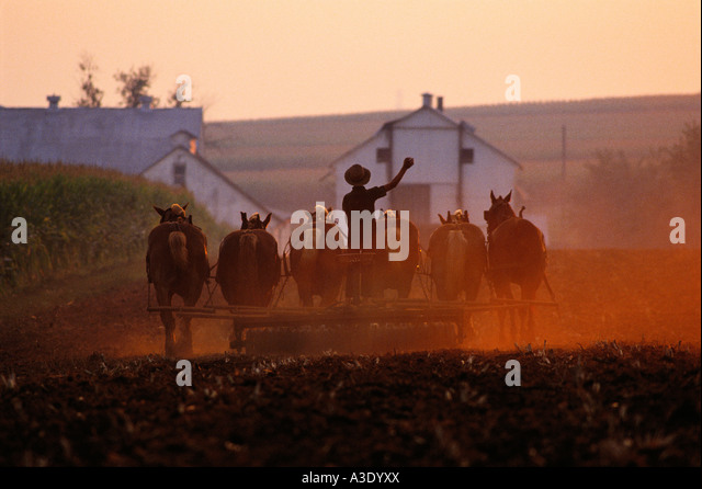 Plowing In The Evening