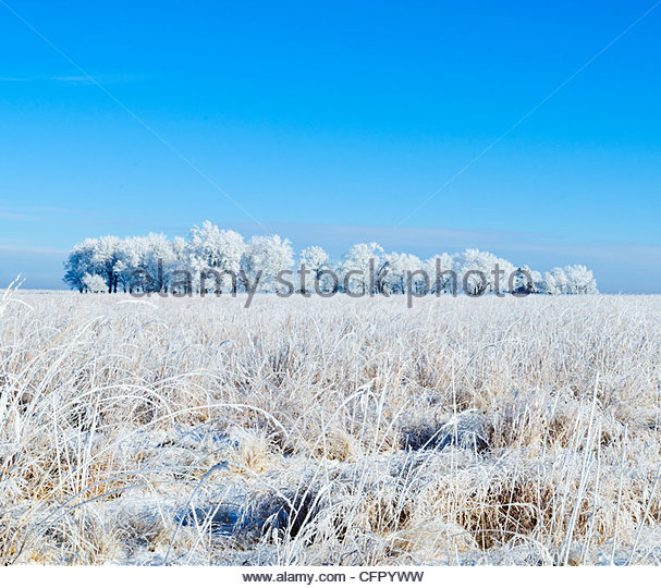 Frosty Trees and Field, Rural Cowley County, February 5, 2011 - Stock Image