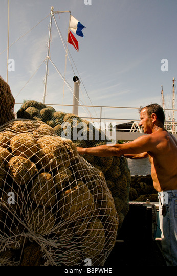 Tarpon Springs Fl sponge harvesting sponger loads sponges in white baskets - Stock Image
