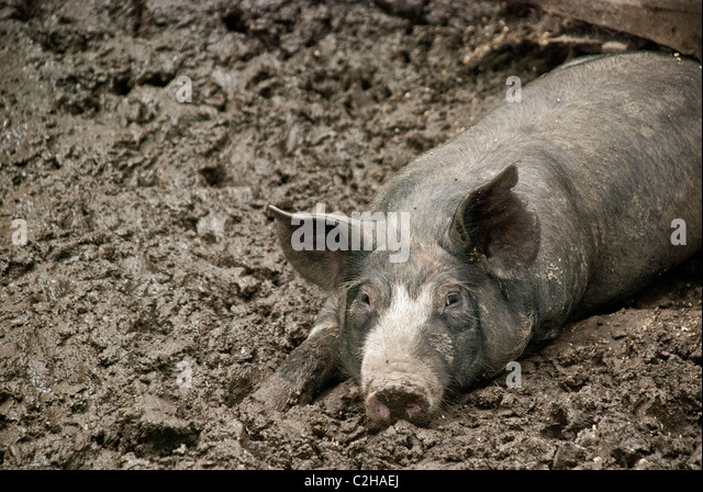 how to make a pig wallow