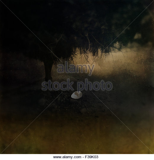 Empty egg shell on the ground under a tree - Stock Image
