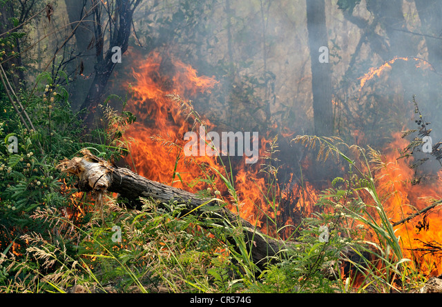 Deforestation by burning off for the recovery of arable land by large landowners, Gran Chaco,  Province, Argentina - Stock Image