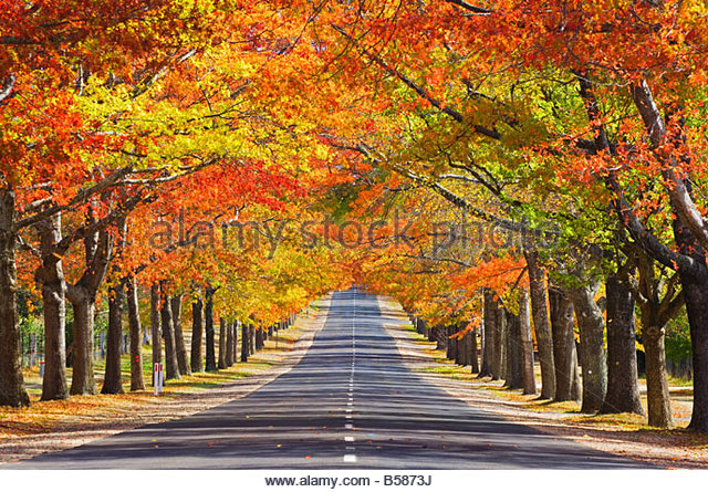 Memorial Avenue in autumn, Mount Macedon, Victoria, Australia, Pacific - Stock Image