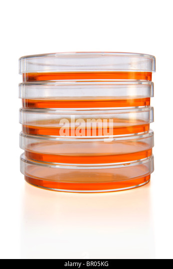 Stack of Petri dishes isolated over white background - Stock Image