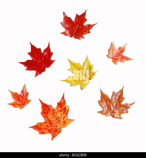Outline of fabric fall leaves - Stock Image