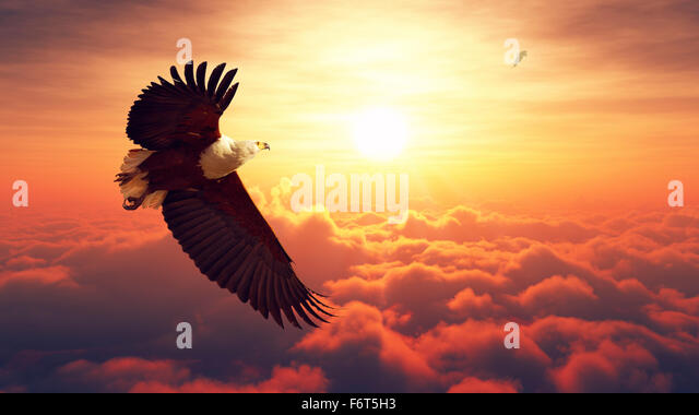 African Fish Eagle flying high above the clouds with sunrise (Digital artwork) - Stock Image