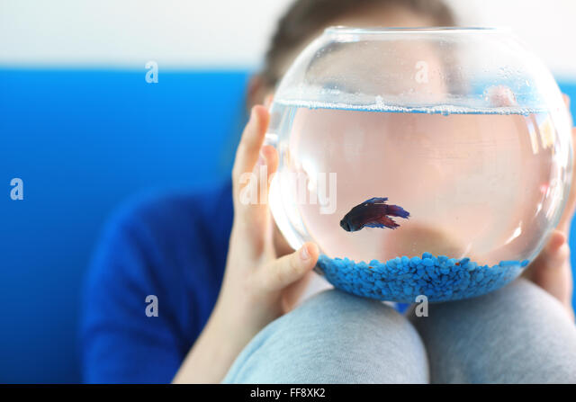 I want to pet ... . Child holding a crystal ball with blue a fish - Stock Image