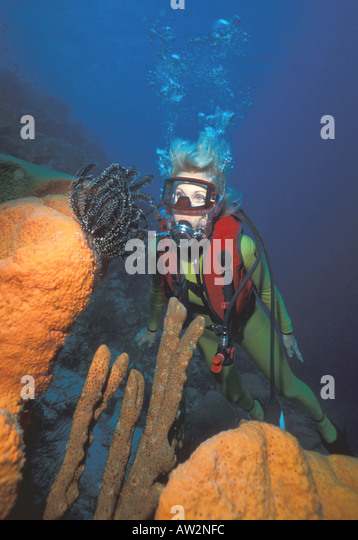 Bonaire Female diver looking at orange sponge white tipped crinoid - Stock Image