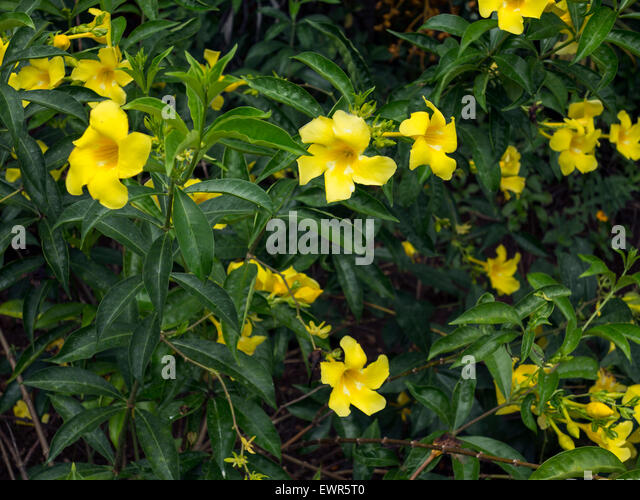 Chamarel flowers ile Maurice indian ocean Mascaregnes mauritius Ocean Indien tropics tropical island - Stock-Bilder