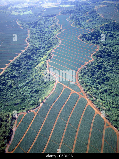 Aerial view of pineapple plantations, Oahu, Hawaii, United States of America - Stock Image