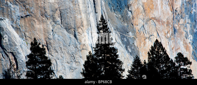 El Capitan with silhouetted trees. Yosemite National Park, California - Stock Image