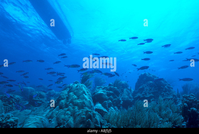 Underwater panorama reef fish school - Stock Image