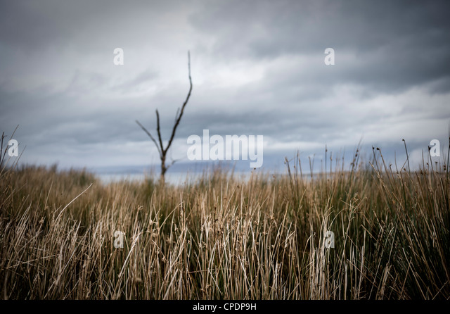 Dead tree and grasses Isle of Skye, Highlands, Scotland, UK - Stock Image