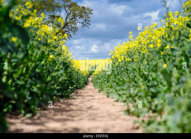 Farnsfield, Nottinghamshire, UK. 28th April, 2015. Bright sunny spells with chance of showers ,rain is needed for - Stock Image