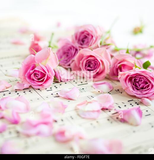 closeup of pink roses on vintage music paper - Stock-Bilder
