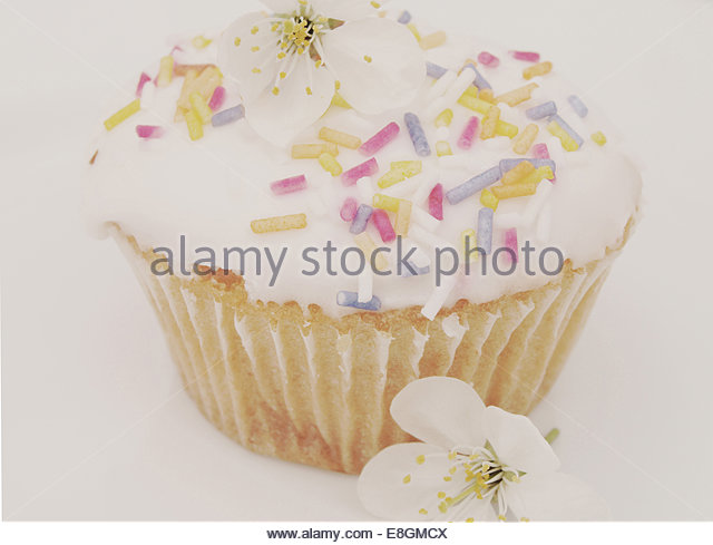 View of cupcake on white background - Stock Image