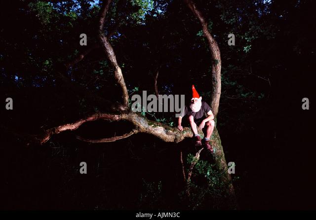 Garden gnome on tree - Stock Image
