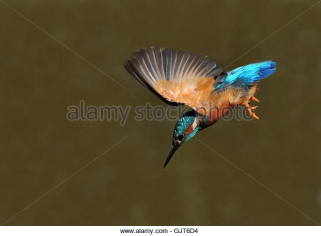 animal bird animals - Stock Image