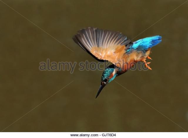 animal bird animals - Stock Image