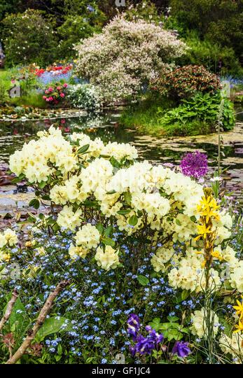 Artweeks stock photos artweeks stock images alamy for Ornamental pond plants