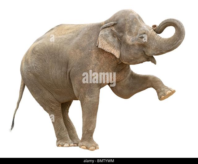 Indian elephant greeting cutout - Stock Image