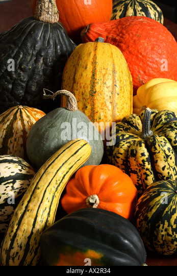Varieties of squash. - Stock Image