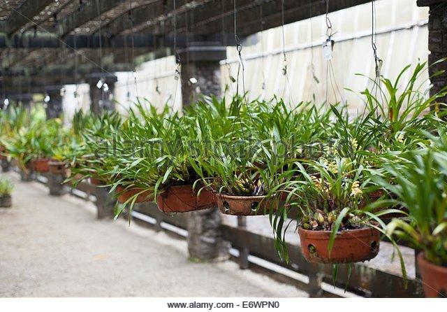 Orchid Nursery in Sao Paulo Botanical Gardens (Orquidário Federico Carlos Hoehne) - Stock Image