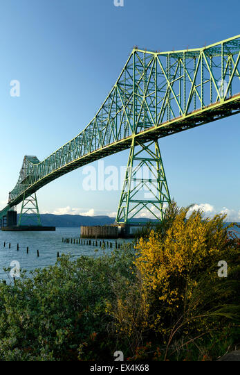Astoria-Megler Bridge and yellow flowers, Columbia River, Astoria, Oregon USA - Stock Image