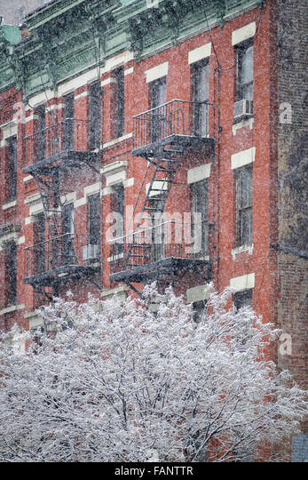 Snow covered tree in front of a Hells Kitchen building with fire escape during a snowstorm. Midtown Manhattan,New - Stock Image