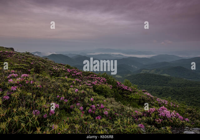 Rhododendron Garden Above Foggy Valley just after sunrise - Stock Image