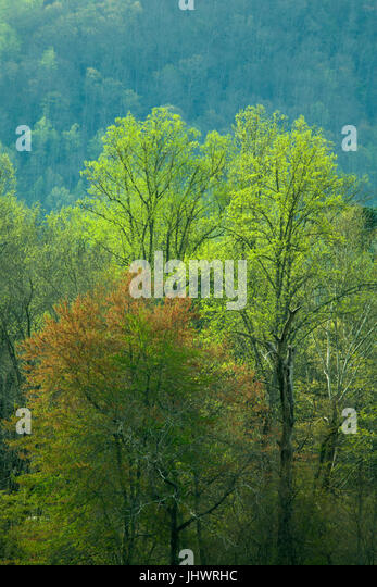 Spring Images, Oconaluftee Area, Great Smoky Mtns National Park, NC - Stock Image