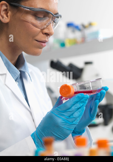Female cell biologist holding a flask containing stem cells, cultivated in red growth medium, to investigate disease - Stock Image