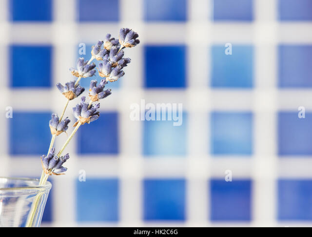 Lavender flowers in glass vase with blue background. Flower still life. - Stock-Bilder