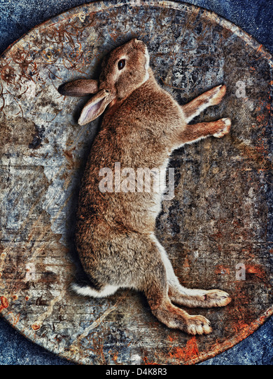 Rabbit in woven basket - Stock Image