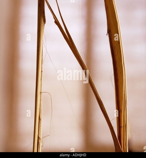 N Letter shaped from pampus grass - Stock Image