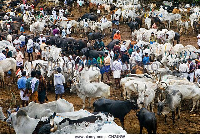 Cattle market, Kerala, India - Stock-Bilder
