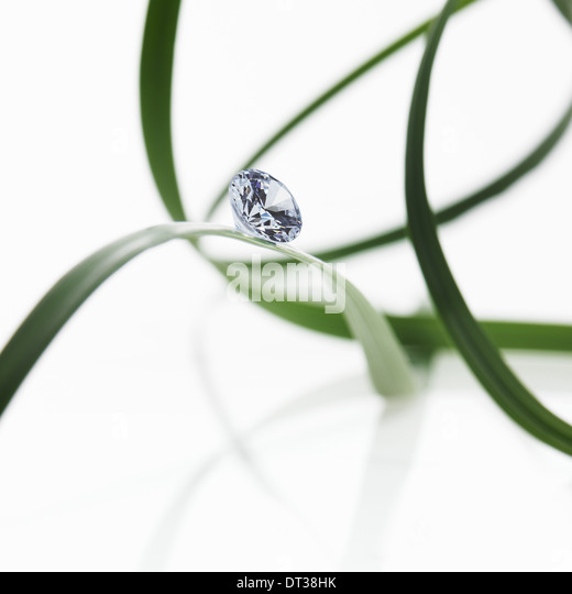 Thin strap green leaves or leaf strands with a small glass bead or gem, with cut facets reflecting the light. - Stock Image
