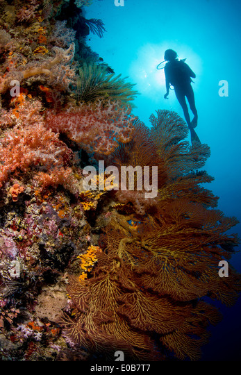 Diver on deep wall dive. - Stock Image