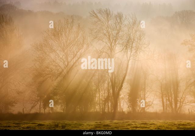 Sunlight bursting through mist covered trees, Near Okehampton, Devon, England. Winter (December) 2009 - Stock Image