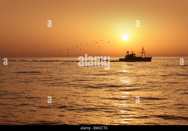 Fisherboat professional sardine catch fishery sunrise backlight with seagulls flying - Stock Image